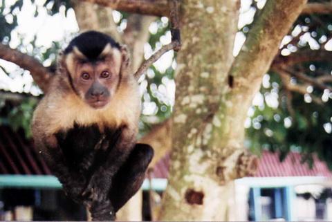 Hugo, o Macaco
