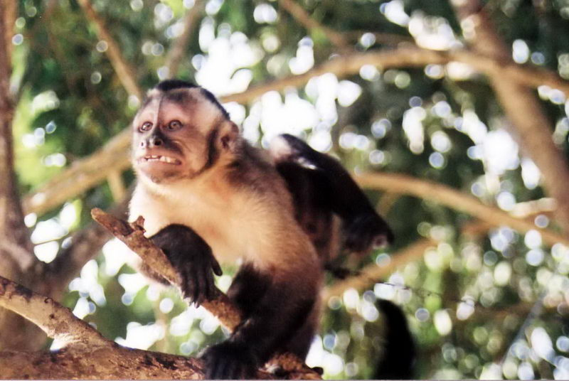 Apresento-lhes Hugo... o Macaco...