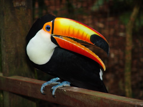 Parque das Aves - PR